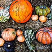Colorful Fall Harvest Poster