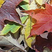Colorful Fall Leaves Poster