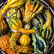 Colorful Gourds In Basket Poster