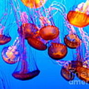 Colorful Jellies Poster by Ellen Heaverlo