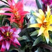 Colorful Mixed Bromeliads Poster