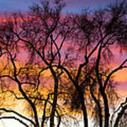 Colorful Silhouetted Trees 26 Poster
