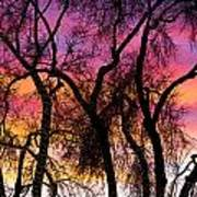 Colorful Silhouetted Trees 27 Poster
