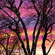 Colorful Silhouetted Trees 33 Poster