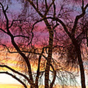 Colorful Silhouetted Trees 37 Poster