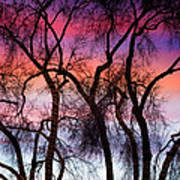 Colorful Silhouetted Trees 9 Poster