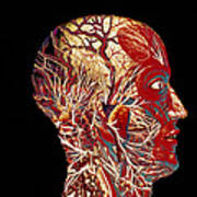 Colour Artwork Of Nerve & Blood Supply Of Head Poster