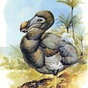 Common Dodo Poster