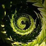 Common Polypody Swirl Poster