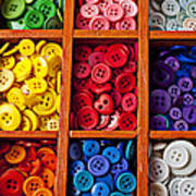 Compartments Full Of Buttons Poster by Garry Gay