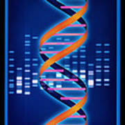 Computer Artwork Of Some Dna With Its Genetic Code Poster