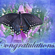 Congratulations Greeting Card - Spicebush Swallowtail Butterfly Poster