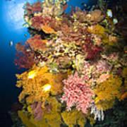Coral Reef Seascape, Australia Poster