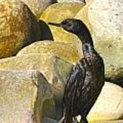 Cormorant 1 Poster