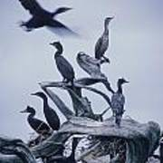 Cormorants Fly Above Driftwood, Grey Poster by Leanna Rathkelly