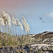 Coronado Island Pampas Grass Poster