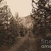 Country Road In Sepia  Poster