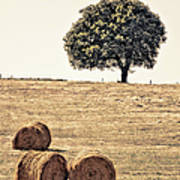 Countryside In Summer Poster