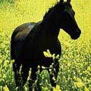 County Tipperary, Ireland Horse In A Poster
