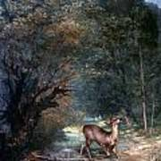 Courbet: Hunted Deer, 1866 Poster