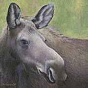 Cow Moose Poster