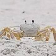 Crabby Eyes Poster