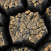 Cracked, Dried Out Mud, Mokolodi Nature Poster