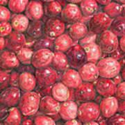 Cranberries Poster