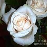 Creamy Roses IIi Poster