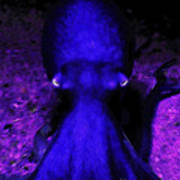 Creatures Of The Deep - The Octopus - V4 - Blue Poster by Wingsdomain Art and Photography