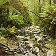 Creek Running Through The Rainforest Poster