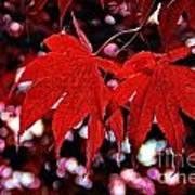 Crimson Beauty Poster