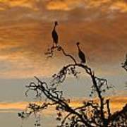 Crowned Cranes At Sunrise Poster