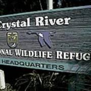 Crystal River Poster