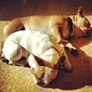 Cuddle Buddies <3 Kirby & Lola Poster by Nena Alvarez