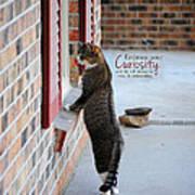 Curiosity Inspirational Cat Photograph Poster