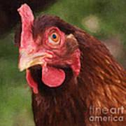 Curious Hen Poster