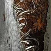 Curly Bark Of A Palm Tree Poster