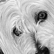 Cute Dog Poster by Imagevixen Photography