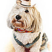 Cute Dog In Halloween Cowboy Costume Poster by Elena Elisseeva