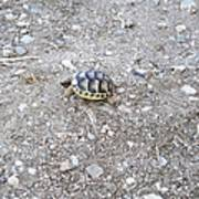 Cute Mini Turtle One Step At A Time  Poster