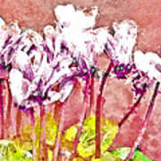 Cyclamen Watercolor Poster