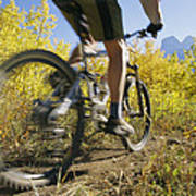 Cyclist Rides Mountain Bike Among Trees Poster