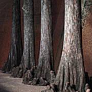 Cypress Poster