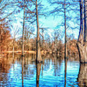 Cypress Swamp In Winter Poster