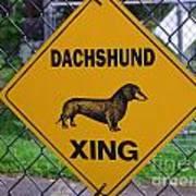 Dachshund Crossing Poster