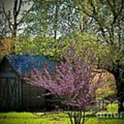 Daddys Old Shed In The Spring Poster by Joyce Kimble Smith