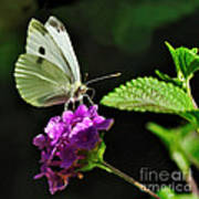 Dainty Butterfly 2 Poster