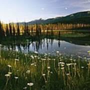 Daisies Grow Near A Lake In Yoho Poster