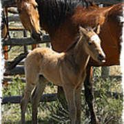 Dam And Foal Poster